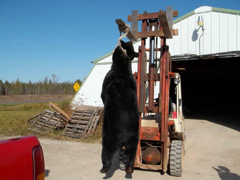 Successful Wisconsin Bear Hunt