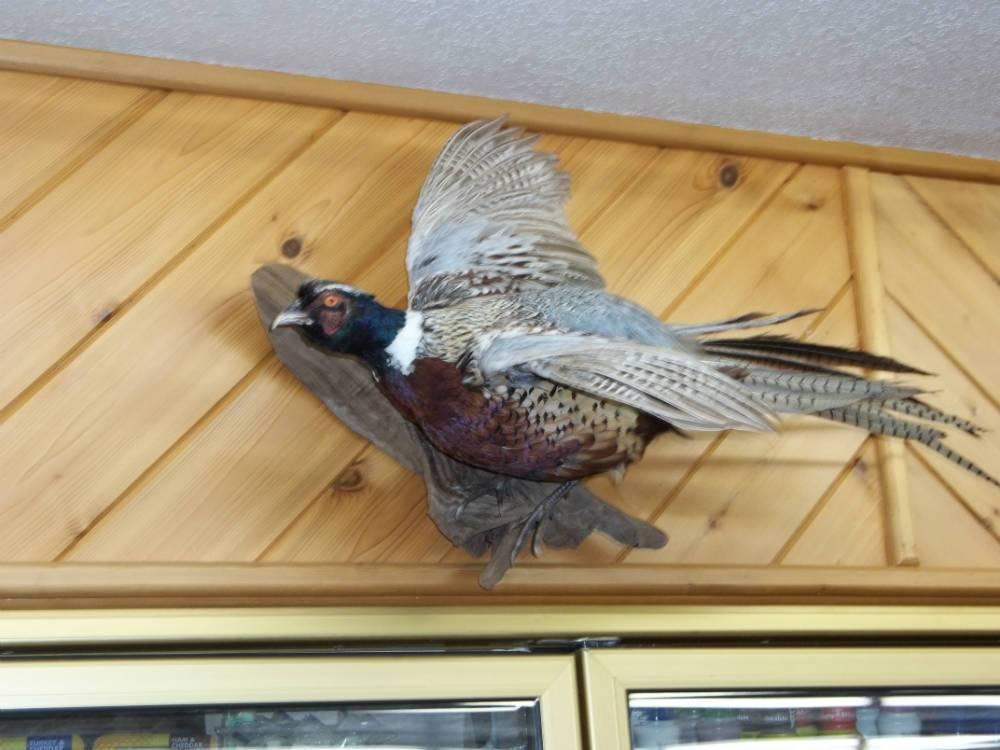 Upland Game Bird Taxidermist