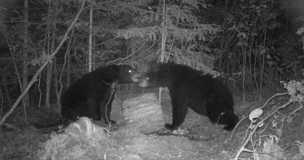 Clam Lake, WI Bear Hunt