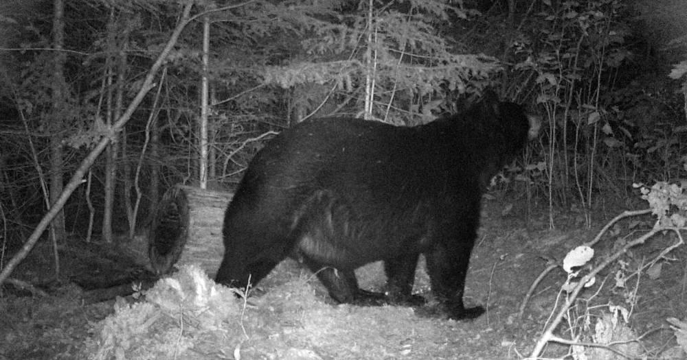 Wisconsin Black Bear Hunts