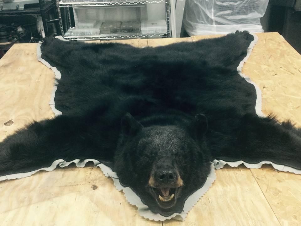 black-bear-taxidermy-rug