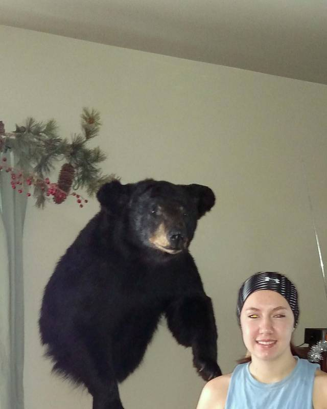 black-bear-taxidermy