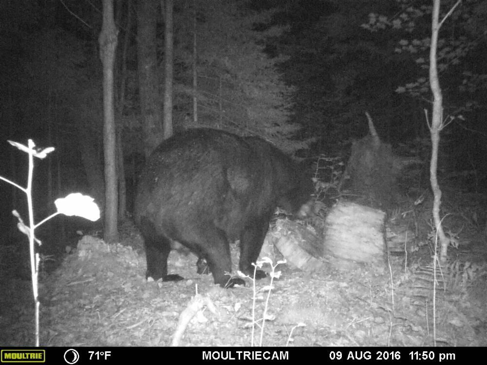 guide-service-clam-lake-bear-hunts2