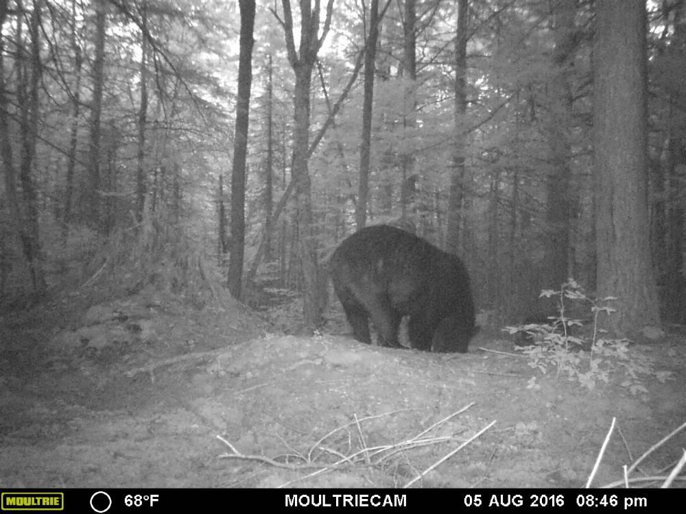 guide-service-clam-lake-bear-hunts3