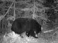 Guided Bear Hunts in WI Zone A & D