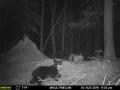 guide-service-clam-lake-bear-hunts1