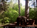 guide-service-clam-lake-bear-hunts11