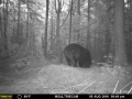 guide-service-clam-lake-bear-hunts3