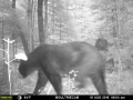 guide-service-clam-lake-bear-hunts4