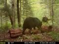 guide-service-clam-lake-bear-hunts5