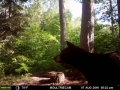 guide-service-clam-lake-bear-hunts8