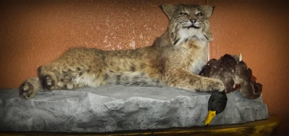 Bobcat Full Mount