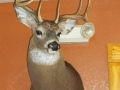 Wisconsin Whitetail Taxidermy