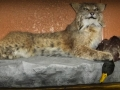 Bobcat Full Mount